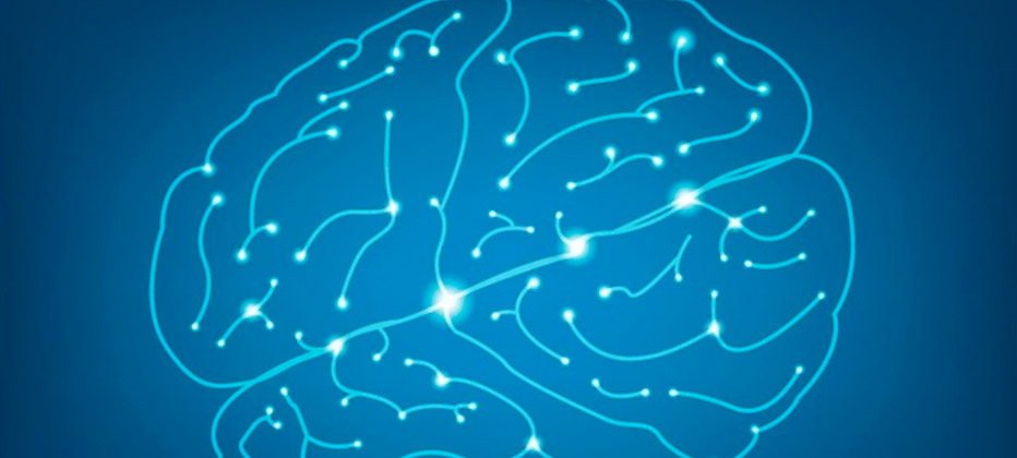 cerebro con alzheimer sin alzheimer
