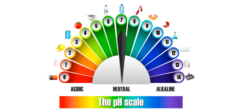 cuales son los alimentos alcalinos